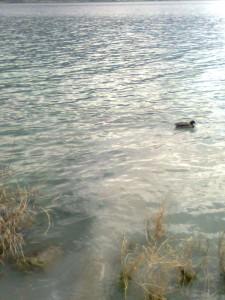 Fogna Pescate 2014