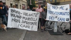 Protesta canile