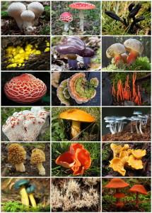 Fungi_Diversity