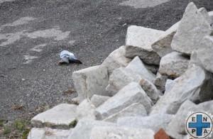 piccioni - via rosmini Lecco (3)