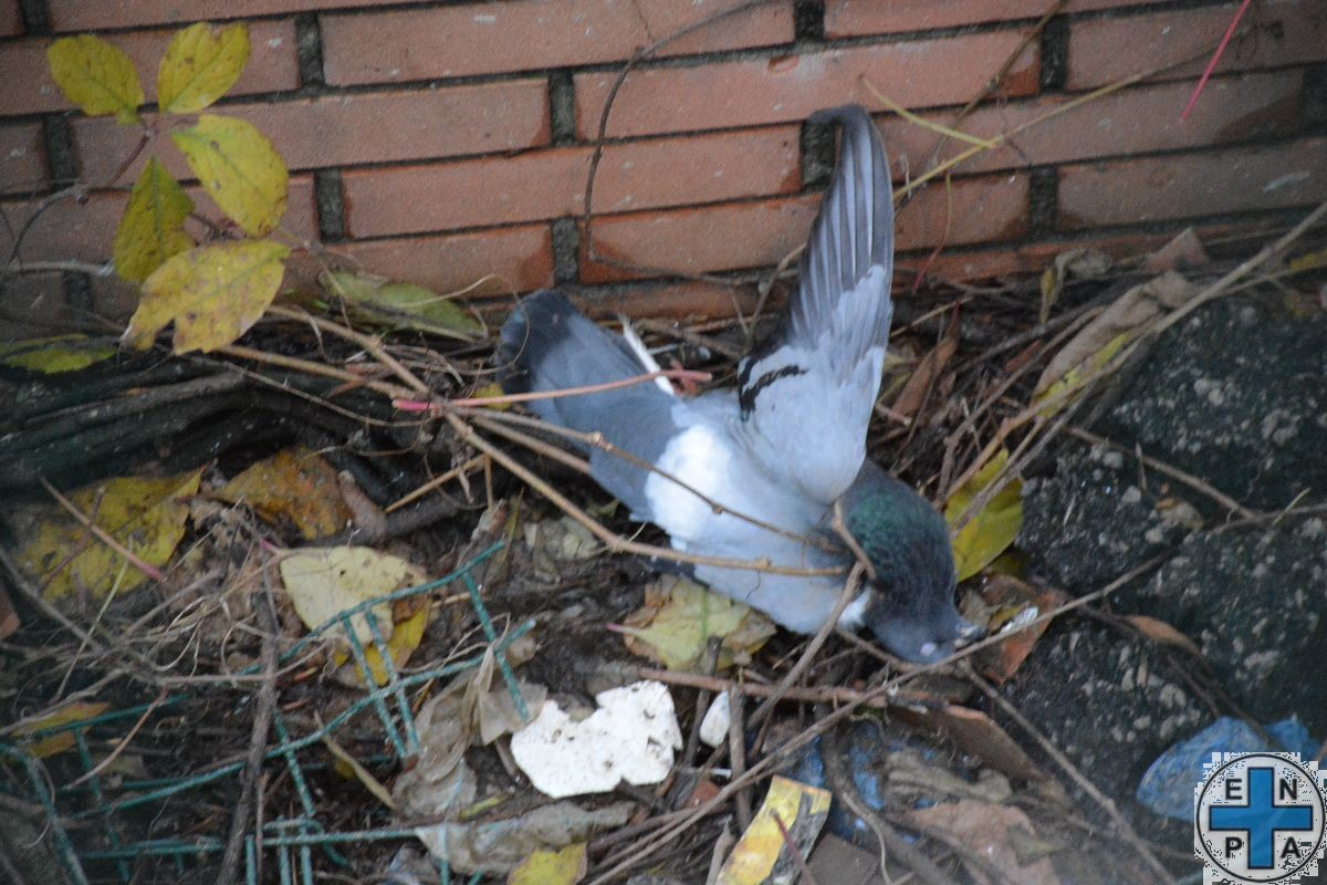 piccioni - via rosmini Lecco (5)