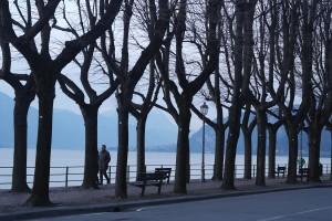 censimento alberi lecco