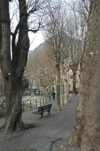 censimento alberi