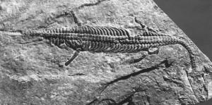 lariosauro fossile