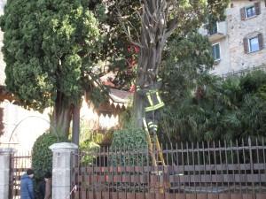 varenna vento albero sradicato fiumelatte (12)