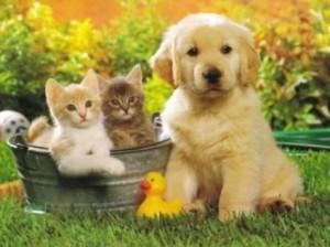 cani gatti cuccioli