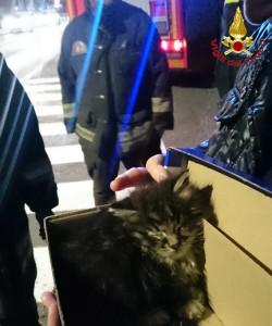 vigili del fuoco pompieri gatto 2
