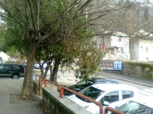 Alberi sul posteggio pubblico a Chiuso