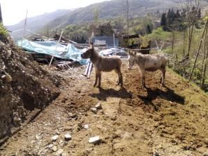 Asinelli a Valsecca