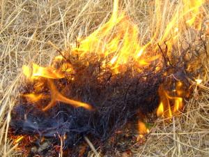 incendio_roghi