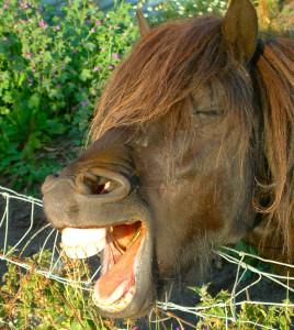 cavallo-bocca