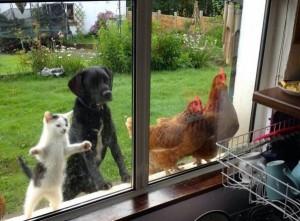 gatto-cane-e-galline-e1454346608701