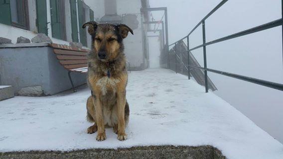 neve-cane-brioschi