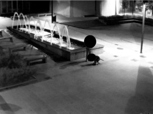 deiezione-cane-valmadrera