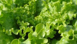 insalata-verdura