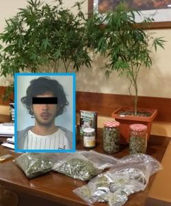 marijuana-fg-matitone-1