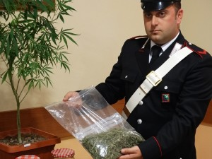 marijuana-fg-matitone-5