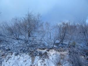 incendio-x-morterone-devastazione