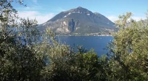 Olivicoltori del Lago di Como 3