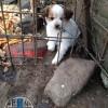 enpa cani mamma e cuccioli (2)