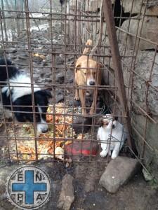 enpa cani mamma e cuccioli (3)