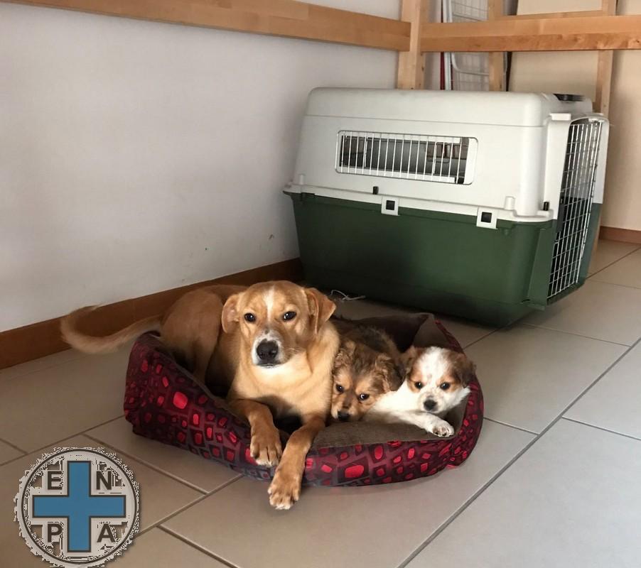 enpa cani mamma e cuccioli (5)