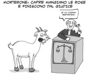 vignetta capra4