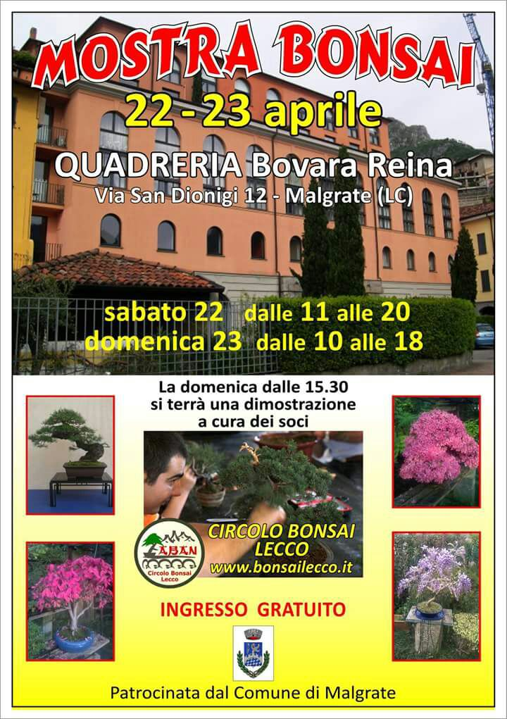 MOSTRA BONSAI MALGRATE
