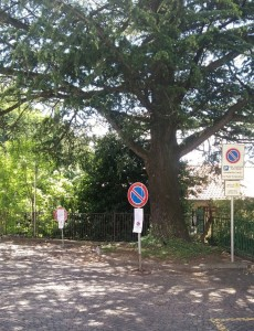 cedro stazione perledo-varenna (1)