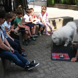 ats scuole animali (1)