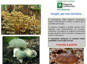 Controllo funghi estate 2017 resize