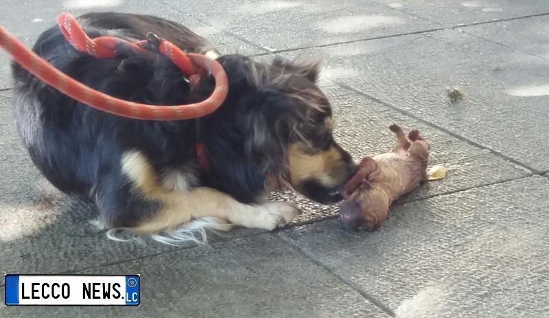 cane partorisce cuccioli lungolago (1)