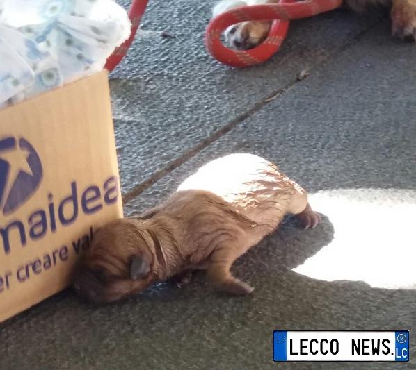 cane partorisce cuccioli lungolago (2)