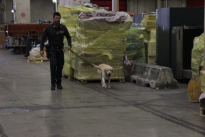 cocaina nera malpensa lecco finanza cani (1)