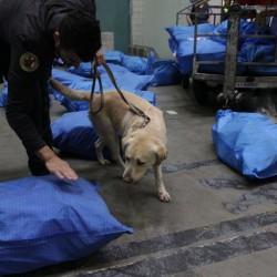 cocaina nera malpensa lecco finanza cani (6)