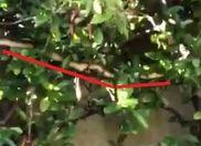 serpente margno resize