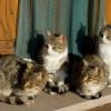 quattro gatti 1