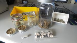 droga questura MDMA ecstasy