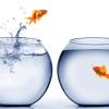 csv fusione pesci