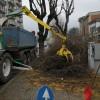 potatura alberi (1)