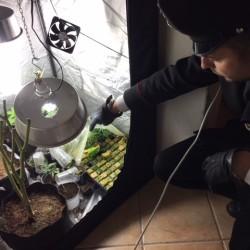 spaccio lecco cannabis F.G.