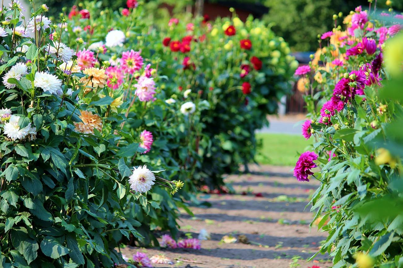 Manutenzione Giardini Milano E Provincia fiori e piante al dettaglio e manutenzione del verde. via